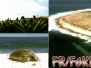 FR-T-TROMELIN ISLAND